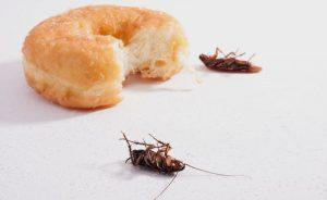 хлебарките в апартамента